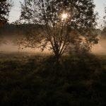 frank_metzemacher_photography_lichreim-2274