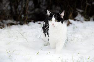 Jack im im Schnee