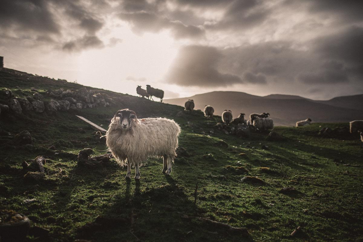 Hochzeitsfotograf Schottland